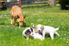 Mixed-breed cute little dog family. - stock photo