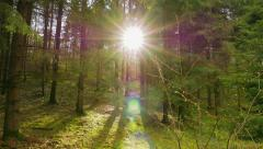 Panorama spring forest and the sun Stock Footage