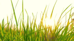 Fresh grass and the sun Stock Footage