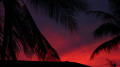 Palm leaves on a red sky. Palm leaves shakes the wind Stock Footage