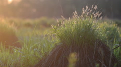 Grass tuft Stock Footage