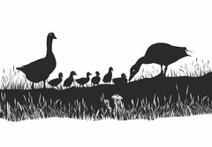 Geese family on spring meadow - stock illustration