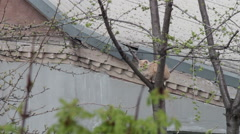 Red cat sitting on the tree Stock Footage
