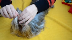 Stock Video Footage of Technology of a combing of a Yorkshire terrier