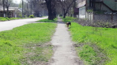 Yard, stray dogs running down the street Stock Footage