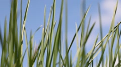Growing of green grass. - stock footage
