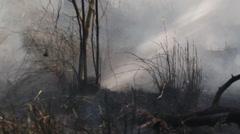 Fireman fighting bushfire Stock Footage