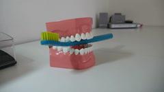 Artificial Teeth Stock Footage