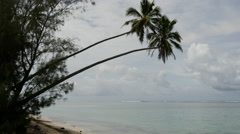 Two palmtrees hanging above the sea in Rarotonga Cook Islands Stock Footage