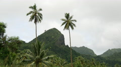 Palmtrees and mountains in Rarotonga Cook Islands Stock Footage