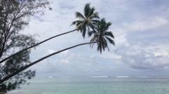 Palmtrees above the sea in Rarotonga Cook Islands Stock Footage