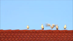 Gulls on roof, background blue sky, space Stock Footage