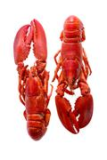 Red Lobsters Duo Isolated on White Background - stock photo