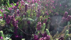 Stock Video Footage of rockery plant in wind
