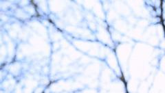 Twirly blur background with tree branches. Stock Footage