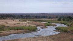 River with herd Stock Footage