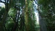 Stock Video Footage of 4K Redwood 3 Axis Dolly 05 Santa Cruz