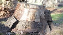 Tree Stump - stock footage