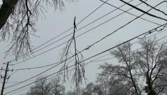 Broken branch hanging from power lines during freezing rain storm - Commercial - stock footage