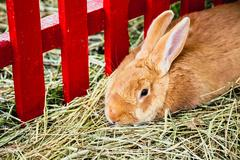 Rabbit or bunny in cell on farm - stock photo