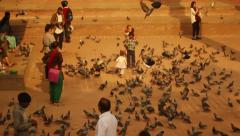 Children play among hundreds of pigeons at Kathmandu Durbar Square, Nepal Stock Footage