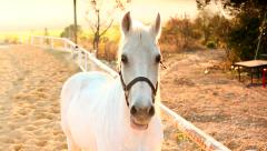 White Horse in the Sun Stock Footage