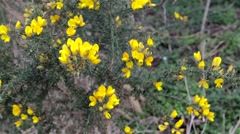 Wild Yellow flowers in the wind Stock Footage