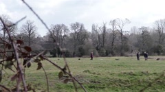 Dog Walkers in Beautiful English Countryside - Fields, Trees, Marshes, Woodland Stock Footage