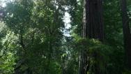 Stock Video Footage of 4K Redwood 3 Axis Dolly 10 Santa Cruz