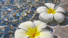 Frangipani on water waves Stock Footage