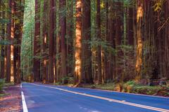Redwood Forest Highway. Avenue of the Giants in Northern California Stock Photos