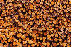 Pile of Lumber. Timber Industry Photo Background. - stock photo