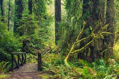 Redwood Forest Trail Stock Photos