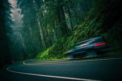 Stock Photo of California 101 Foggy Redwood Highway