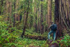 Redwood Hiking - stock photo