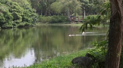 Beautiful view the lake of the Daan Forest Park, in Taipei capital Taiwan-Dan Stock Footage