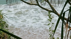 View of the ocean beach through coastal thickets Stock Footage