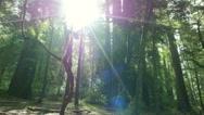 Stock Video Footage of 4K Redwood 3 Axis Dolly 14 Santa Cruz