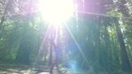 Stock Video Footage of 4K Redwood 3 Axis Dolly 15 Santa Cruz
