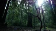 Stock Video Footage of 4K Redwood 3 Axis Dolly 16 Santa Cruz