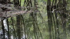 Reflection of trees in the water - Ticino River Regional Park - Italy Stock Footage