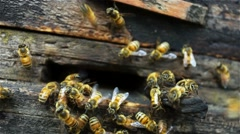 Bees In The Hive. - stock footage