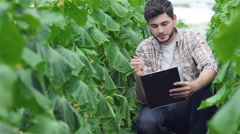 Guy sitting between the green rows with a clipboard inspect leaves Stock Footage