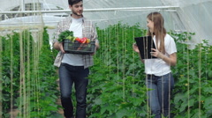 Guy gathering vegetables approached the girl agronomist Stock Footage