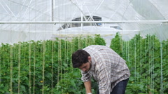 Guy worker in the greenhouse digs Stock Footage