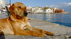 Stray Dog Naps in Old Town Chania on Crete Island, Greece Stock Footage