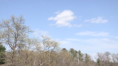 Clouds over a Forest Timelapse Stock Footage