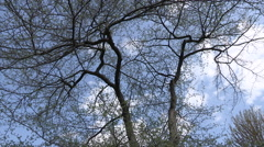 Clouds Time lapse with Trees In Foreground Stock Footage