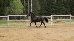 Horse rears in a paddock Stock Footage