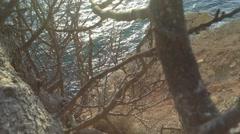 Crimea Russia Sevastopol Fiolent - Black sea, rocks , tree, moving camera 5 Stock Footage